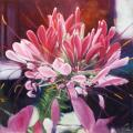"<br>Subject title: ""Cleome"" - Spider Flower<br/>Status: Available<br>"